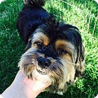 Adopt A Pet :: Sammy - Beavercreek, OH