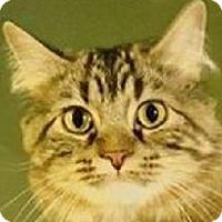 Adopt A Pet :: Clover - St. Charles, MO