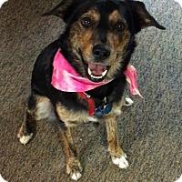 Adopt A Pet :: Happy Girl - McArthur, CA