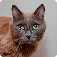 Adopt A Pet :: Rascal - Mission Hills, CA