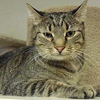 Adopt A Pet :: Marlo - Tulsa, OK