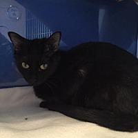 Adopt A Pet :: Garnet - Atlanta, GA