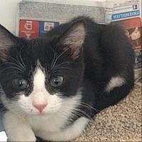 Adopt A Pet :: Matlock - Lakewood, CA