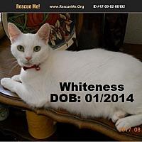 Adopt A Pet :: Whiteness - Chandler, AZ