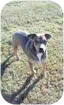 Shepherd (Unknown Type)/Retriever (Unknown Type) Mix Dog for adoption in Adamsville, Tennessee - Buster
