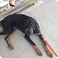 Adopt A Pet :: Gilbert - Courtesy Post - Cincinnati, OH