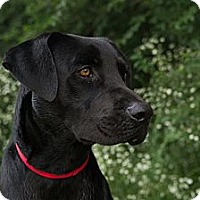 Adopt A Pet :: *Matt - PENDING - Westport, CT
