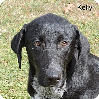 Australian Cattle Dog Mix Puppy for adoption in Slidell, Louisiana - Kelly