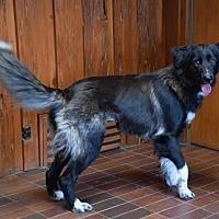 Adopt A Pet :: Gypsy - Des Moines, IA