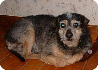 Terrier (Unknown Type, Medium) Mix Dog for adoption in Antioch, California - Buster
