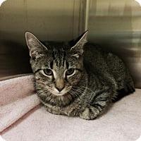 Adopt A Pet :: Luna (Petsmart FH) - Trenton, NJ