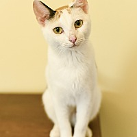 Adopt A Pet :: May Pole - Nashville, TN