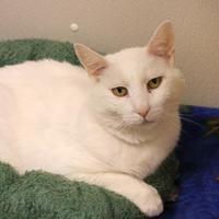 Adopt A Pet :: Noritsu * Adoption fee sponsored* - Brunswick, ME