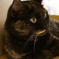 Adopt A Pet :: Delhia - Salem, NH