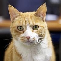 Adopt A Pet :: Ms. Kitty - Sioux Falls, SD