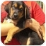 Photo 1 - Doberman Pinscher/Australian Shepherd Mix Puppy for adoption in Pisgah, Alabama - Russell