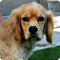Adopt A Pet :: Oliver - white settlment, TX