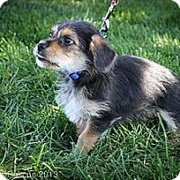 Adopt A Pet :: Bosco - Broomfield, CO