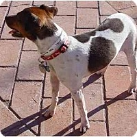 Adopt A Pet :: Chestnut - Scottsdale, AZ