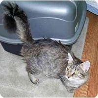Adopt A Pet :: Audrey - Odenton, MD