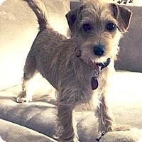 Adopt A Pet :: MAGGIE MAE - Salt Lake City, UT