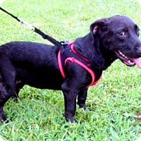 Adopt A Pet :: CAMILLA - Leland, MS