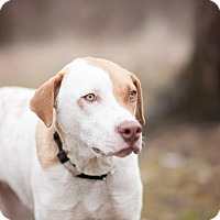 Adopt A Pet :: Nelson - Lewisville, IN