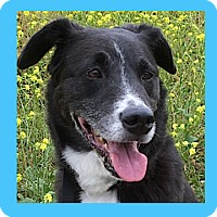 Adopt A Pet :: Bodhi - Pasadena, CA
