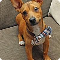 Adopt A Pet :: Bennett - Kenner, LA