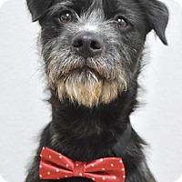 Adopt A Pet :: Toby - Dublin, CA