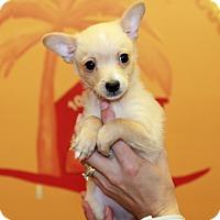 Adopt A Pet :: Louie - Boca Raton, FL