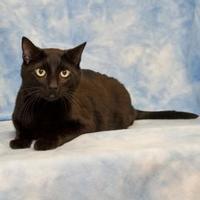 Adopt A Pet :: Rival - Elk Grove Village, IL