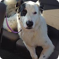 Adopt A Pet :: Bear - Folsom, LA