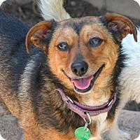 Adopt A Pet :: SCARLET - Marina Del Ray, CA