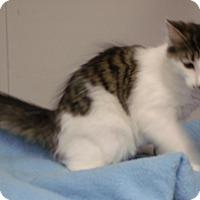 Adopt A Pet :: Avery - Somerset, KY