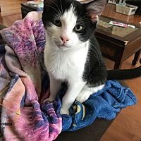 Adopt A Pet :: Branch - Smithfield, NC