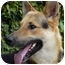 Photo 2 - German Shepherd Dog Mix Dog for adoption in Los Angeles, California - Maximilliam von Magdeburg