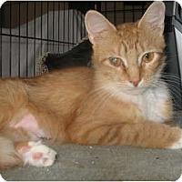 Adopt A Pet :: Lolla - Acme, PA