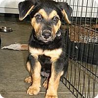 Adopt A Pet :: Mamma Bear - Mission Viejo, CA