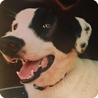 Adopt A Pet :: Sawyer/COURTESY POST - cedar grove, IN