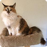 Adopt A Pet :: Petunia - Cocoa, FL