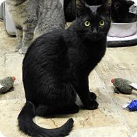 Adopt A Pet :: Scarlet - Montgomery City, MO
