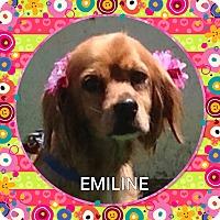 Adopt A Pet :: Emiline - Santa Barbara, CA