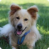 Adopt A Pet :: Kennedy - Yorktown, VA