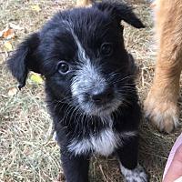 Adopt A Pet :: Jan - Regina, SK