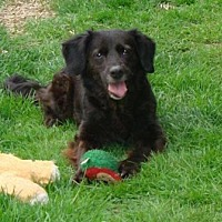 Adopt A Pet :: Samantha - Transfer, PA