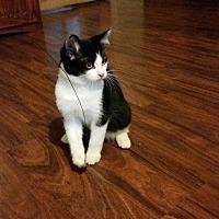 Adopt A Pet :: Nitro - Washington, DC