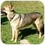 Photo 2 - German Shepherd Dog Dog for adoption in Houston, Texas - Thumper