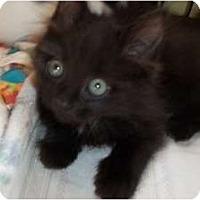 Adopt A Pet :: Cricket - Acme, PA