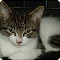Adopt A Pet :: Chester - Pascoag, RI